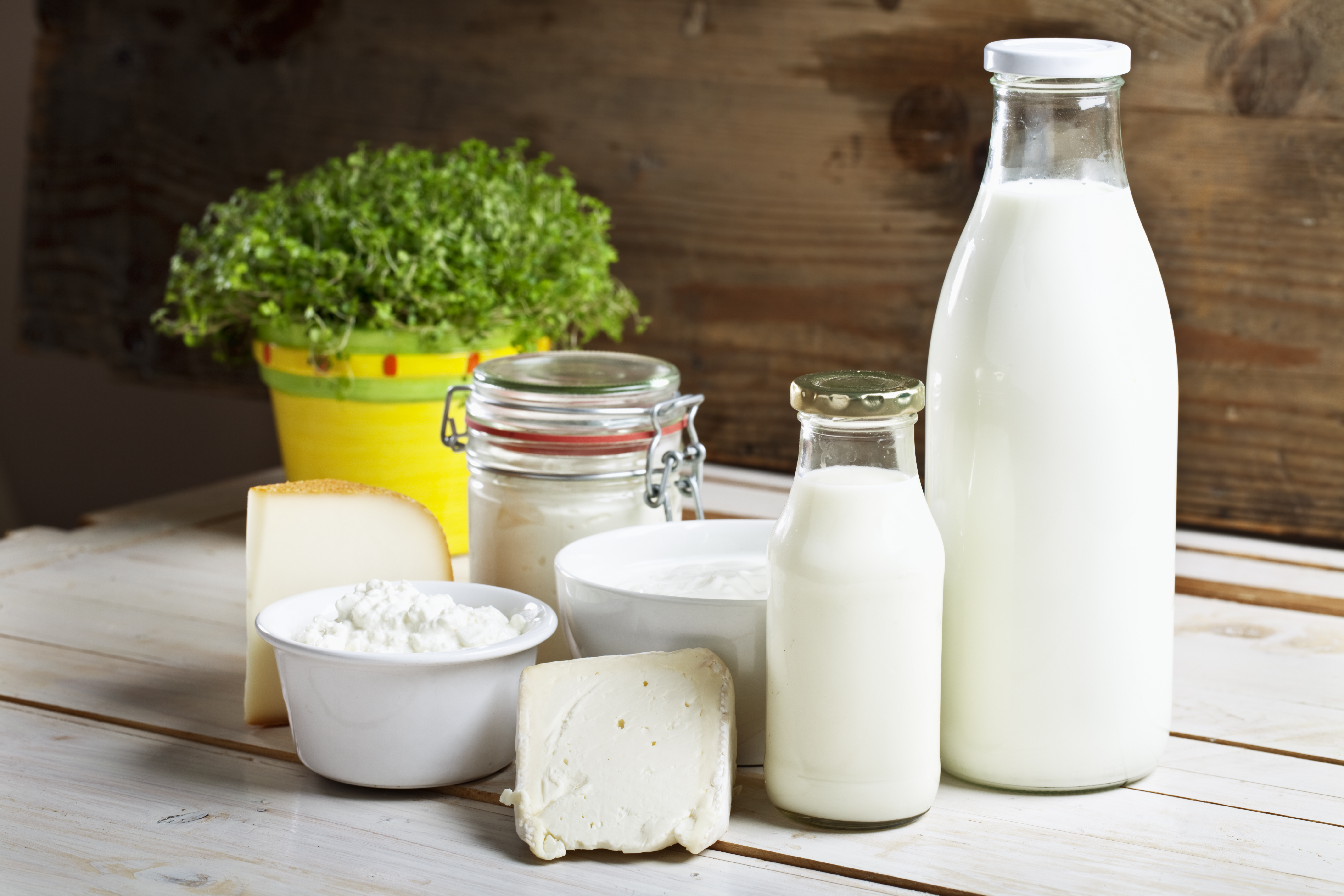 Assorted Dairy on Table by a plant